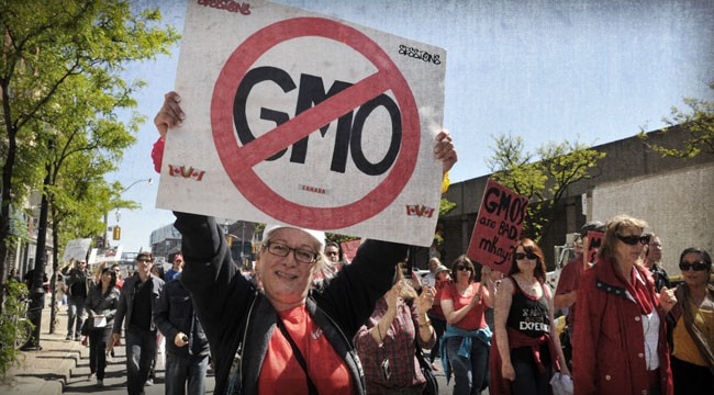 GMO Bombshell: Are GMOs Perfectly Safe After All?