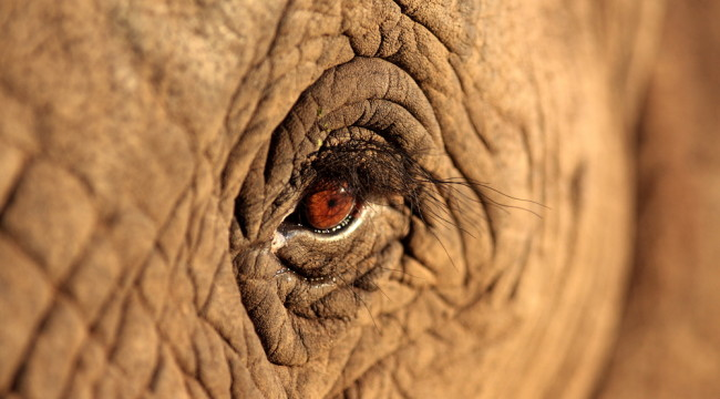 Do Elephants Possess the Secret to Cancer?