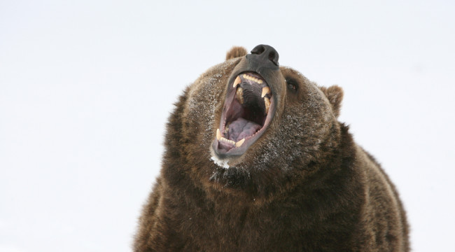 This Bear Market Is No Grizzly From Hell… Yet