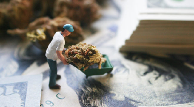 Cannabis Famine Threatens Nation