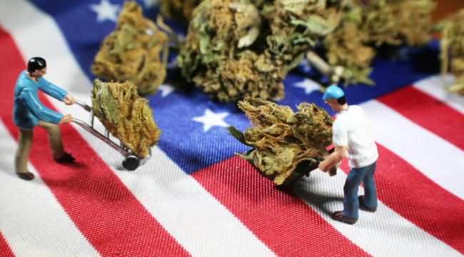 """In Pot We Trust"": Marijuana Experts Gather in D.C."