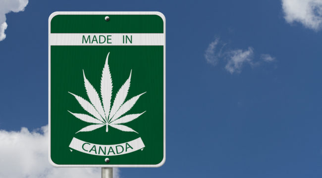 Ray Blanco Reports: Why I'm Not Worried About Pot Stocks